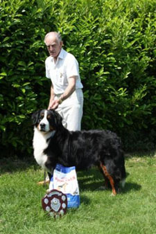 2013 Central Bernese Mountain Dog Club Open Show - Best In Show & Best Dog - Jaybiem I Try for Shadybower JW owned by Tony Granger