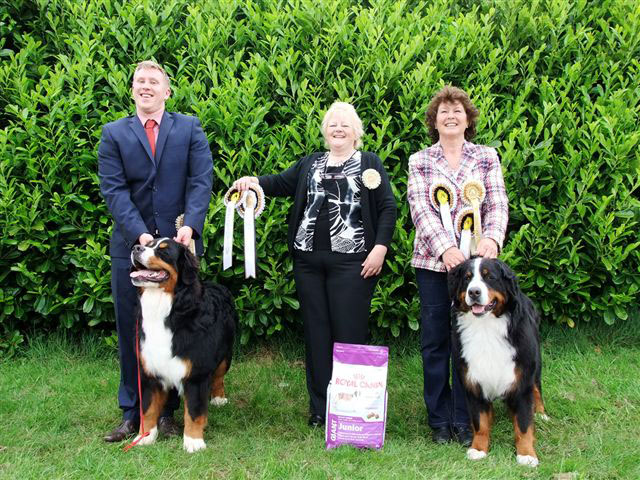 Best in Show: Gary Dybdall & Meadowpark Vertigo - Reserve Best in Show: Julie Baldwin & Fortonpark Dutch Delight - Judge:  Kathy Pawlyszyn
