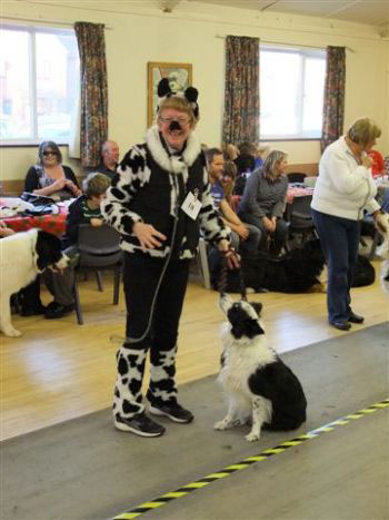 2013 Central Bernese Mountain Dog Club Christmas Fun Day
